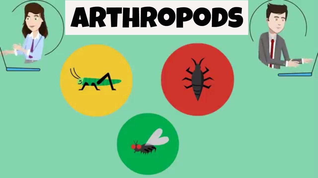 Characteristics Of Arthropods Arthropods Life Science Science