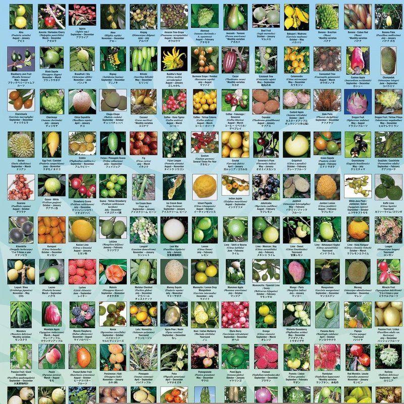 Vendidos individualmente, os 5 tipos de mudas deste kit somariam um total de R$ 248,80. Na compra do Kit vc paga R$ 148,80 e economiza R$100,00. Esse Kit é ideal para quem tem um pequeno espaço no quintal, pois traz uma seleção de frutíferas diversificadas que se adaptam a vários tipos de climas. Aguns detalhes deste kit: - Amora Gigante Portuguesa e Fruta do Milagre: podem ser cultivadas em vaso caso o espaço disponível seja bem pequeno. - Pitaya vermelha: como é uma trepadeira, pode ser…