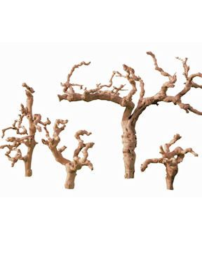 17++ Vine wood info