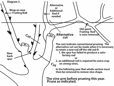 Another good pruning grapevine diagram for deciding which ones to cut a gardening pinterest - How to prune and train the grapevine ...