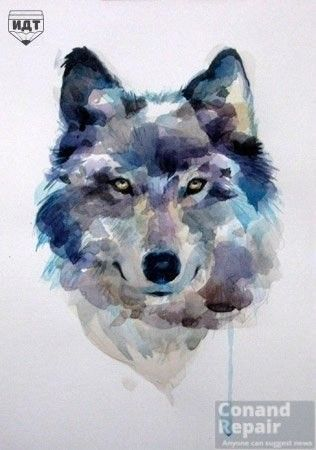 How to draw a wolf? #Draw a #Wolf #watercolor Step 7 of 7 ....Push ...