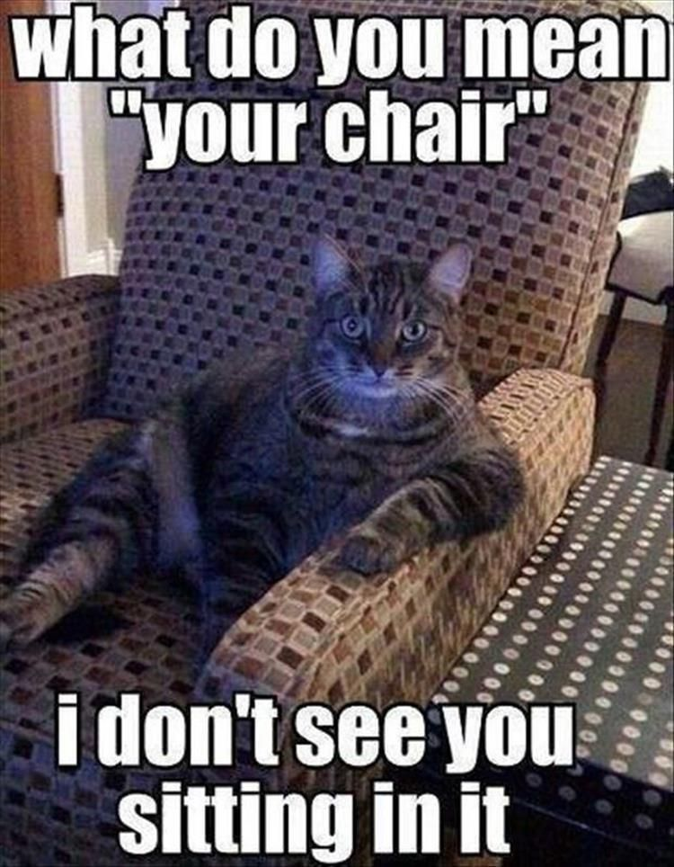 funny animal pictures 26 pics only cat people understand rh pinterest com cat sitting in a chair