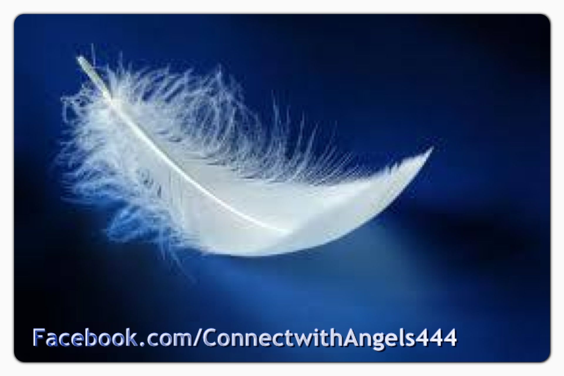 Feathers Appear When Angels Are Near Love Light Lightworker