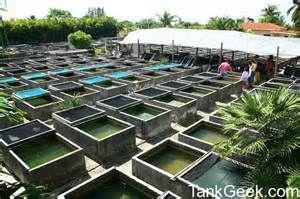Tropical fish farm in florida | Catfish farming, Pond ...