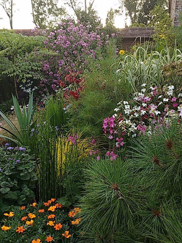 Perry Rodriguez on Spring plants, Veg garden, Garden