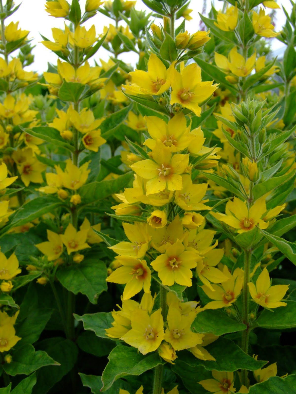 Wederik Tuinplanten Schaduwplanten Tuinplanning