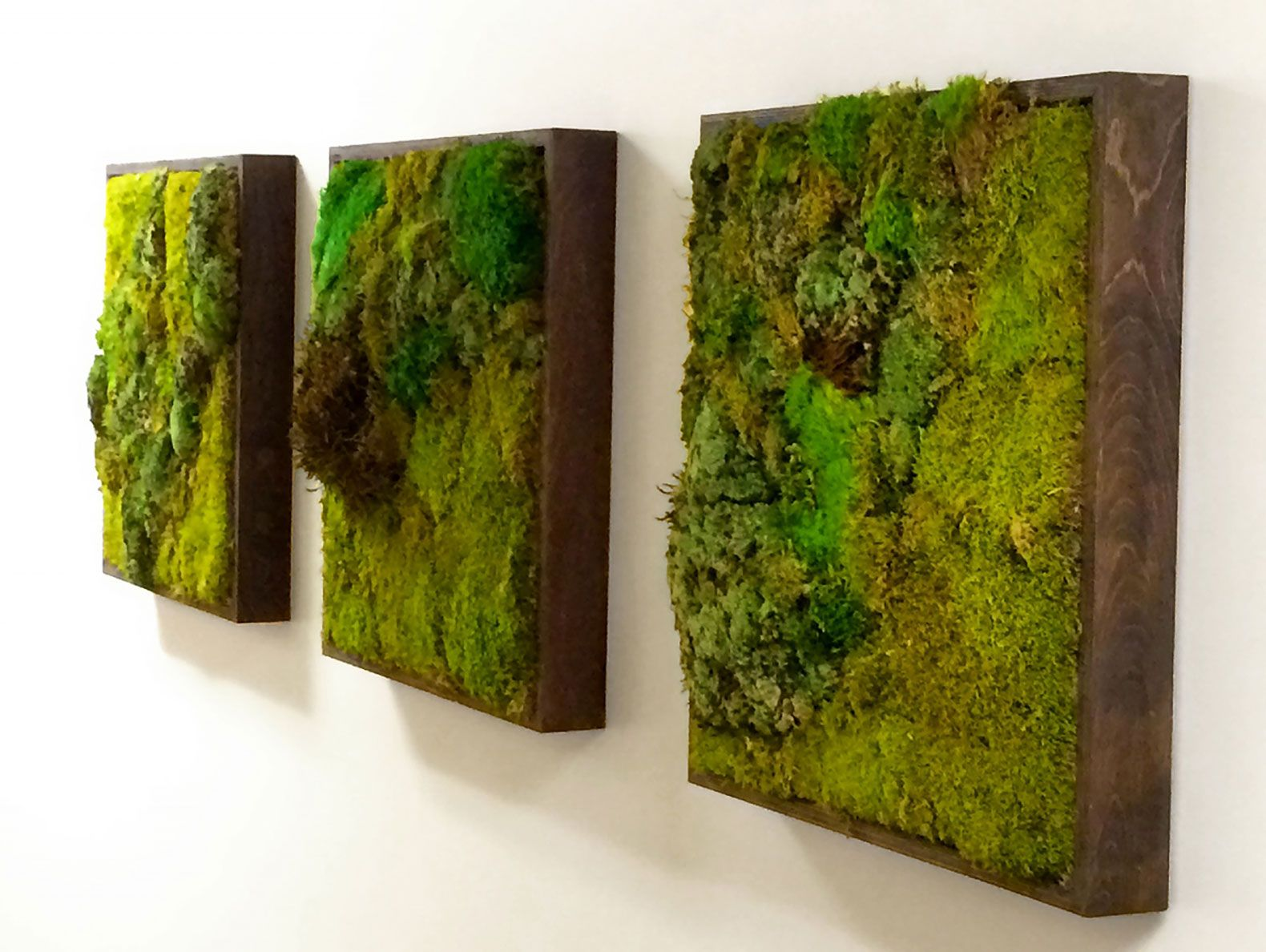 Plant Wall Art moss walls: the newest trend in biophilic interiors | moss wall