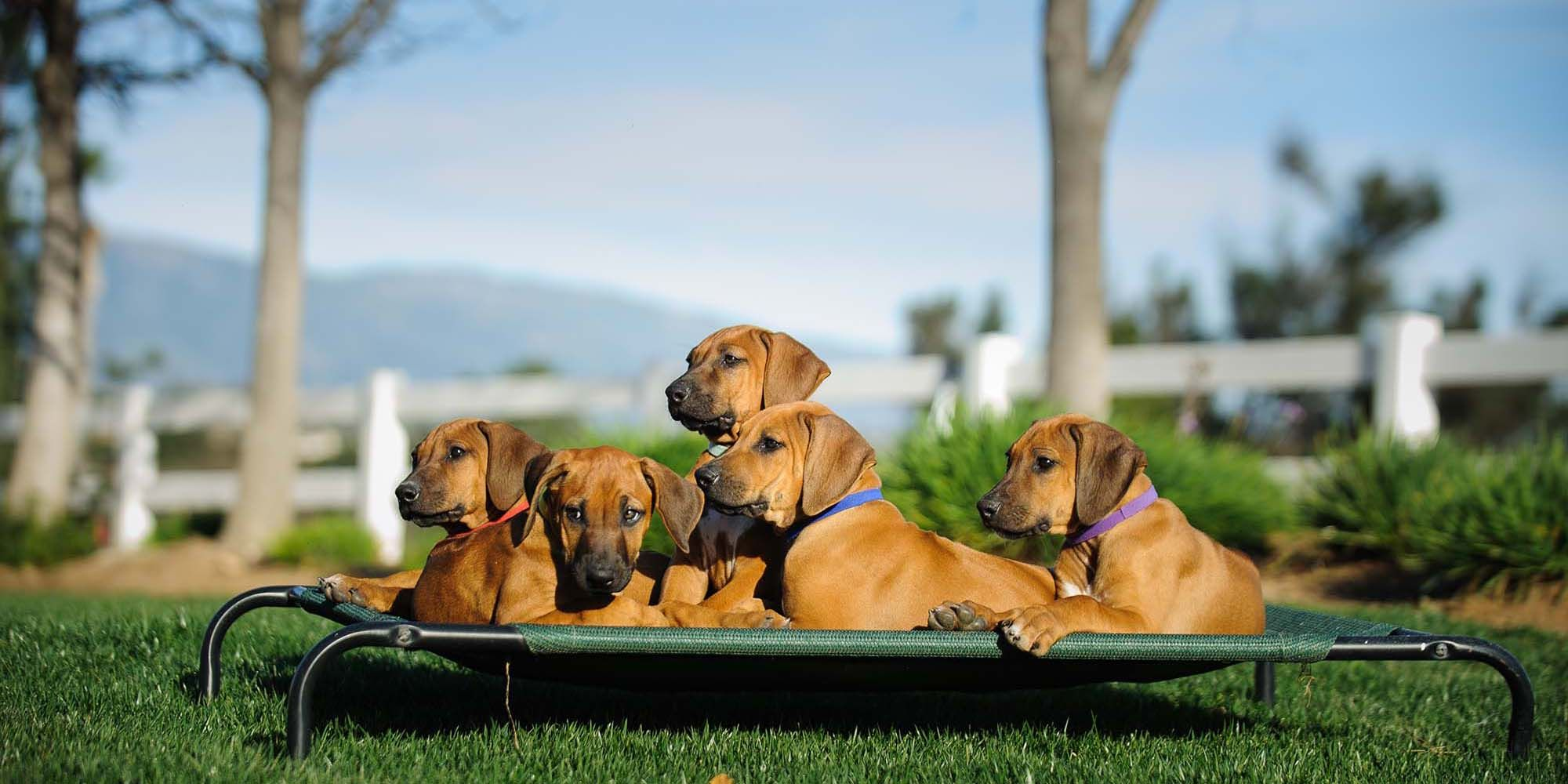 The 50 Toughest Dog Beds (don't go flat and/or chewproof