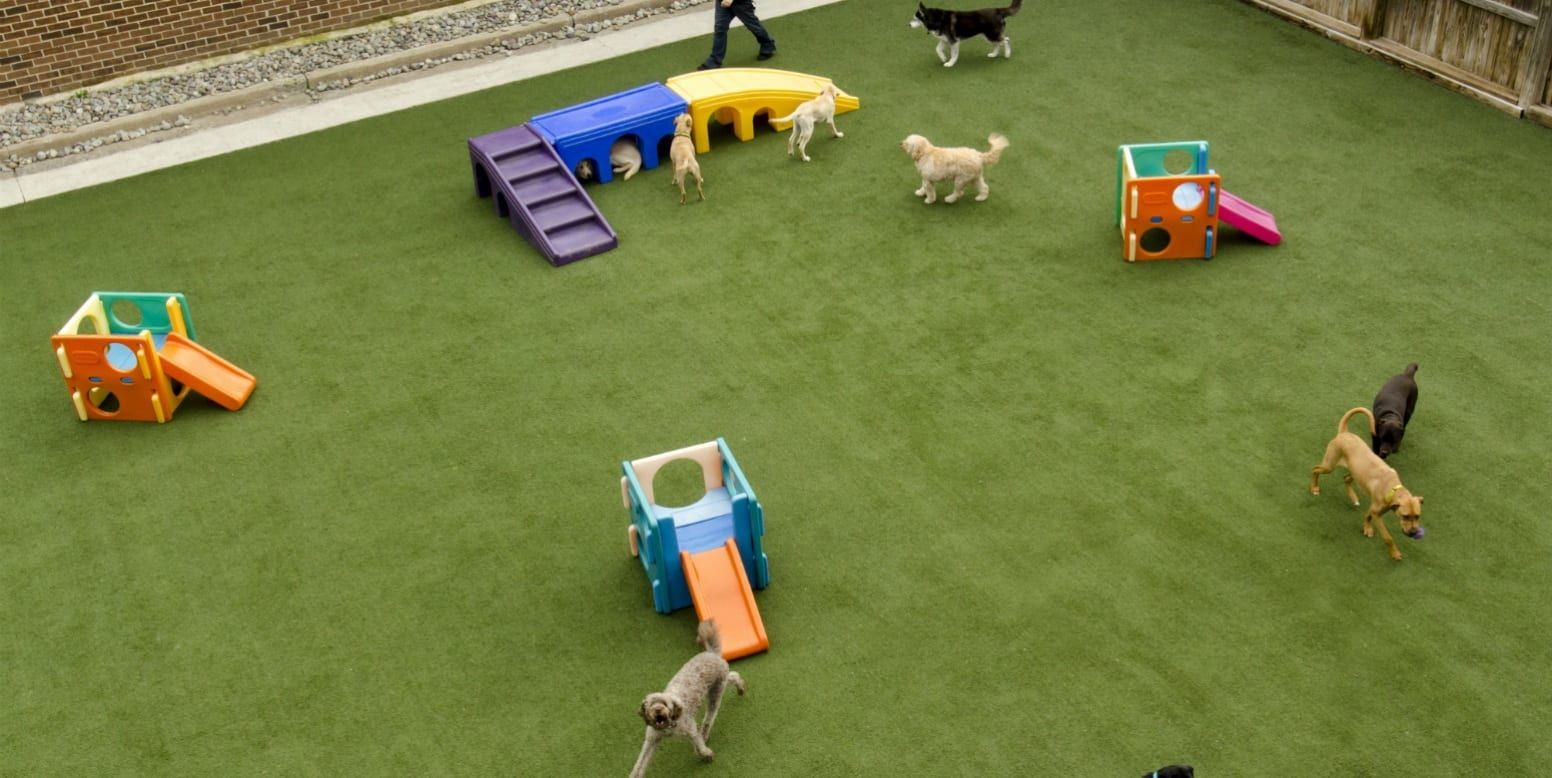 The Artificial Grass Designed Specifically for Dogs