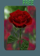 3d Rose Live Wallpaper Free Apk Download Live Wallpapers Wallpaper Free Live Wallpapers
