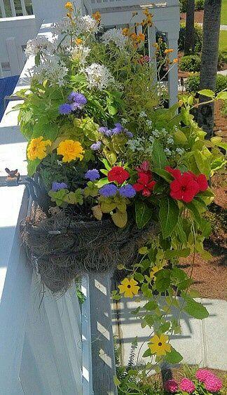 Pin By Carol Moore On Window Boxes 2 Window Box Flowers Flower Garden Black Eyed Susan Vine