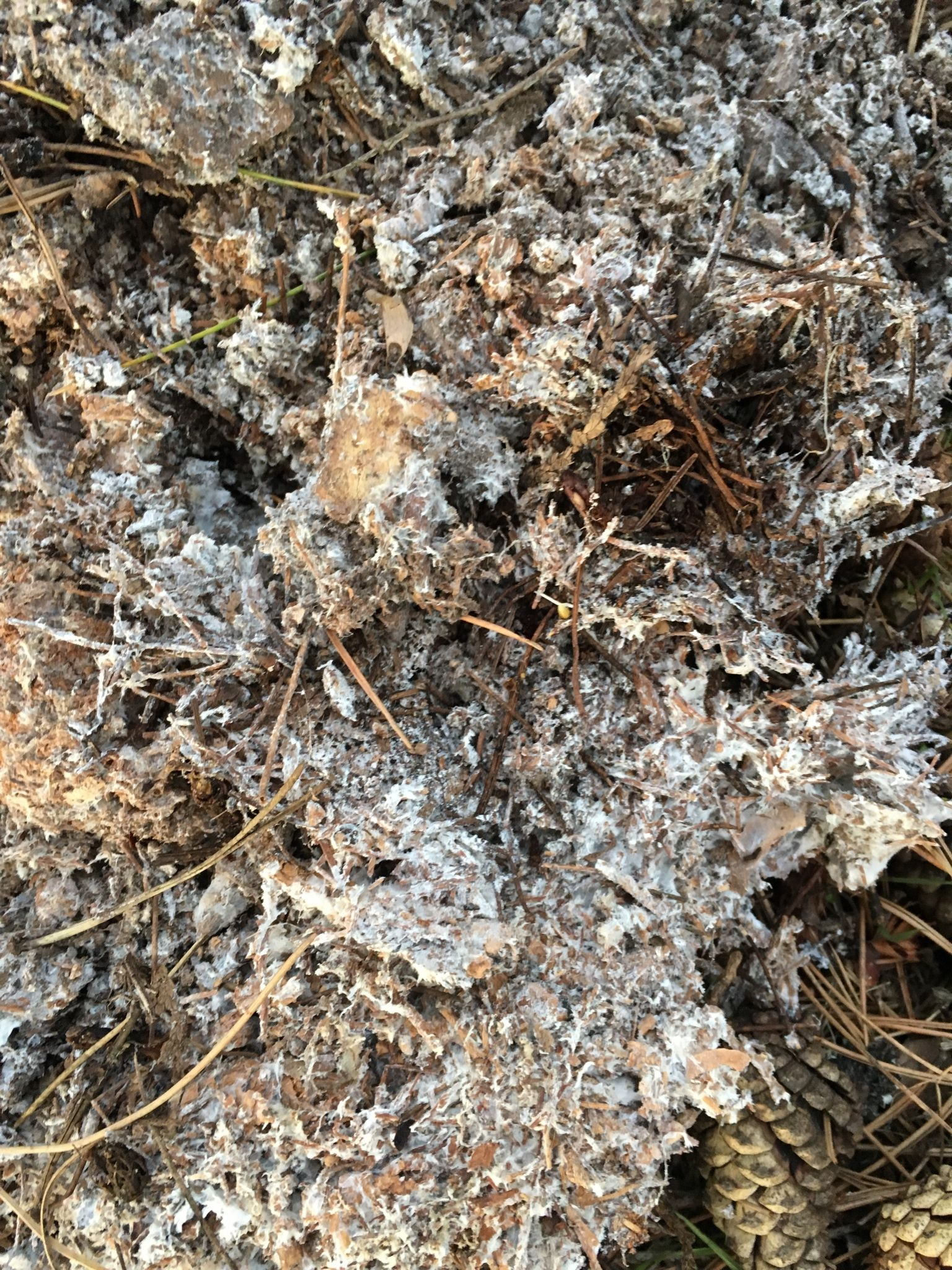 What Is This Stuff In My Soil Mold Fungus And Will It Hurt The