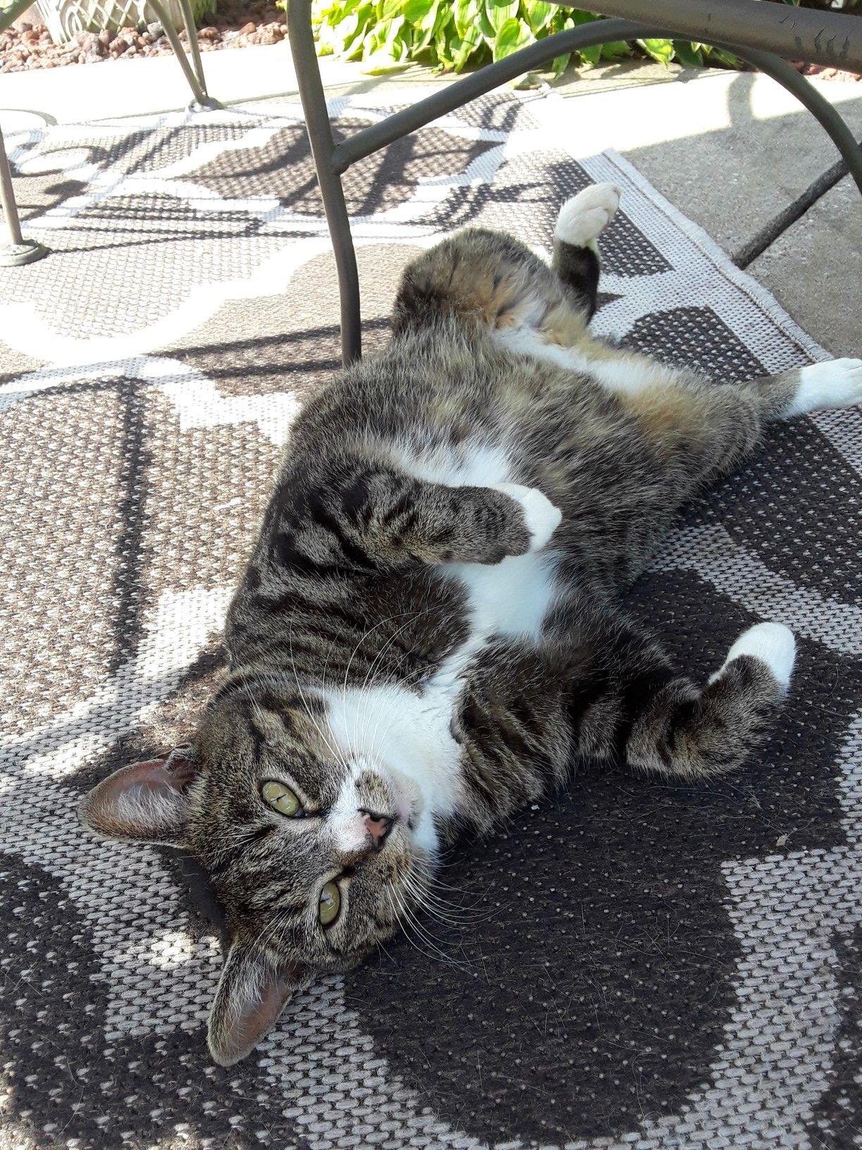 Pin By Zayn Malik S Girl Rebekha G On My Cats Grey Tabby Cats