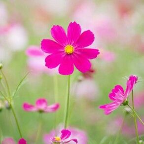Deep pink flowers.