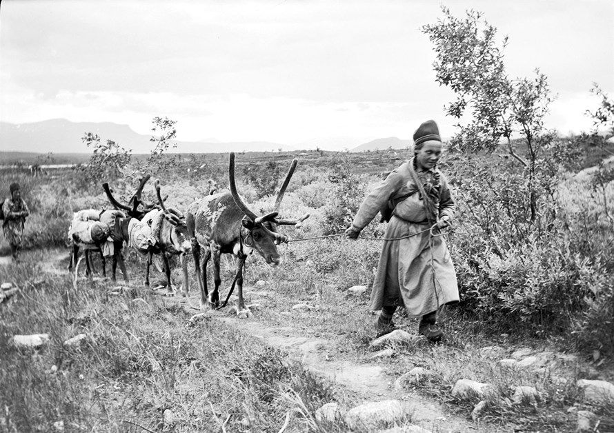 Sami women with reindeer, Sweden. The reindeer in the back are carrying bundles of something.