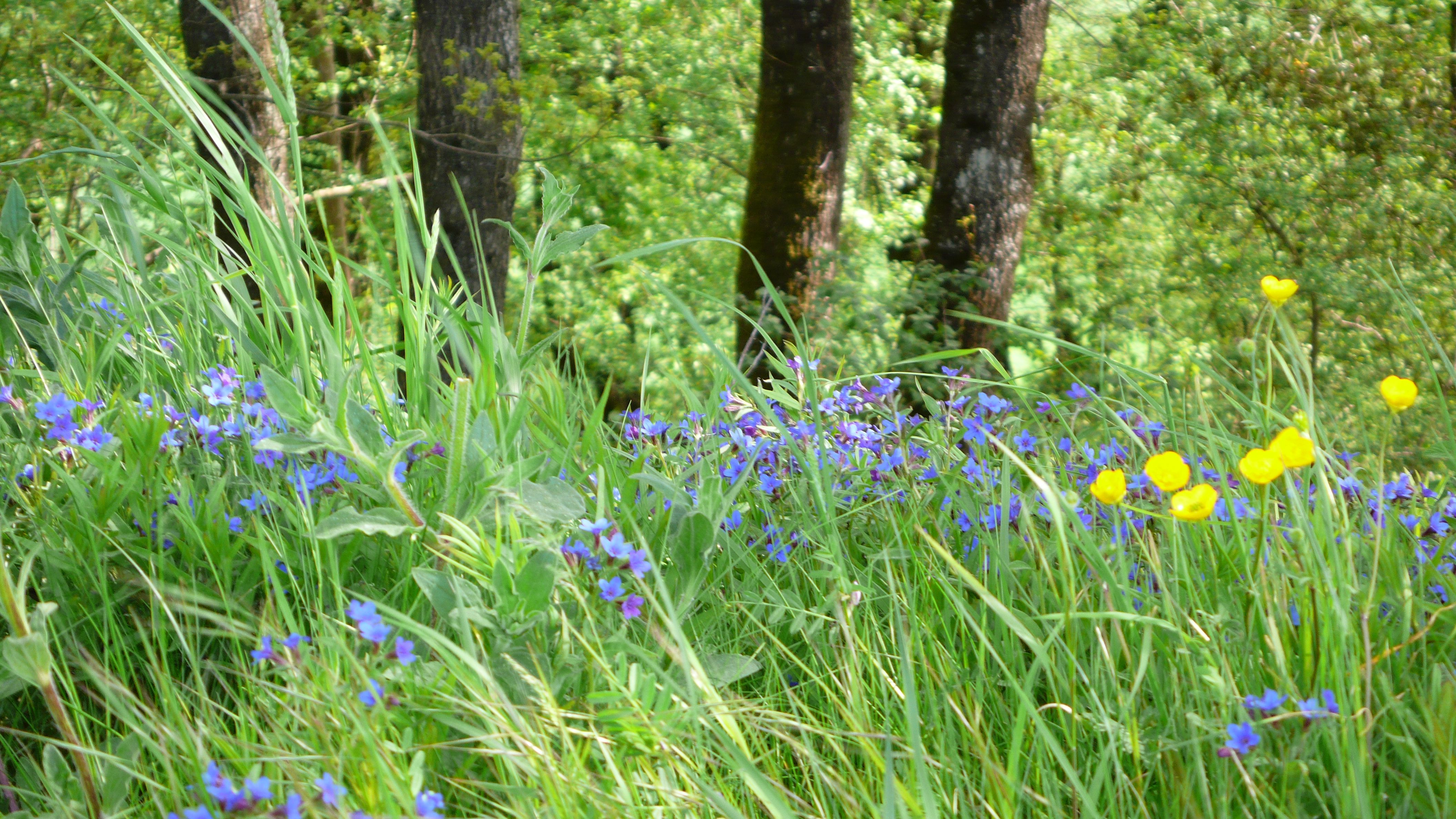 Nature at its newest: woodland glade near Lectoure, Gers