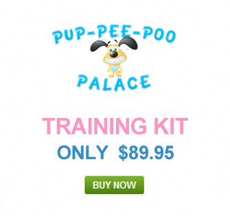 How Do I Potty Train A Yorkie Puppy Potty Training Dog Training