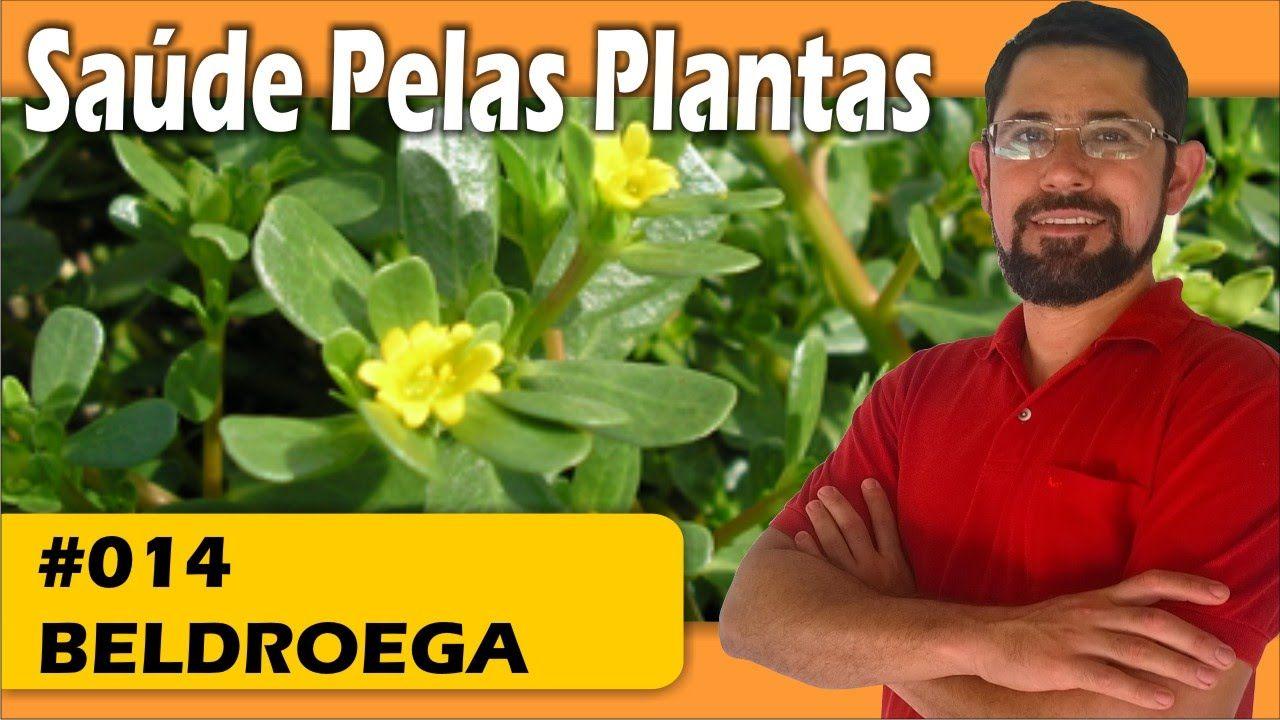Saúde pelas Plantas - Beldroega [hipertensão, circulação, sist. imunológ...