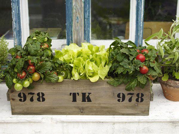 Gemüse Und Kräuter Auf Dem Balkon | <<< Balcony Ideas ... Gemuse Auf Dem Balkon Hochbeet Garten