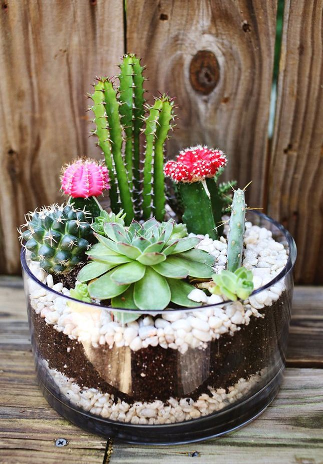Make your own terrarium with this diy mini cactus
