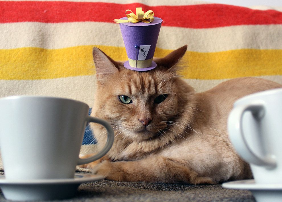 Have some catnip tea! It'll get you messssssssssed up, bro