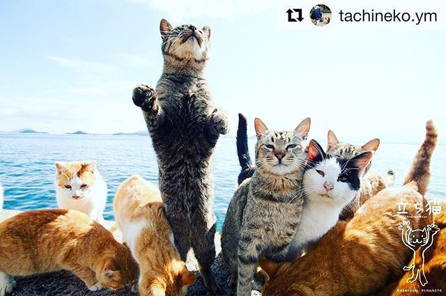 Hang on everyone 🙀#riseup Tomorrow is another day. Our feature🌟 image of fabulous cats from Japan is @tachineko.ym  #hope #harvey #iwillsurvive #adoptdontshop #positivevibes #sundayfunday #caturday #motivation #catsofinstagram #catvideo