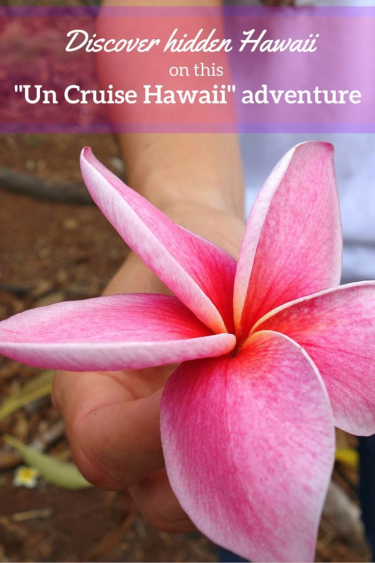 """""""Un Cruise HAWAII   Snorkeling at night with manta rays. Visiting a plumeria farm and making leis from pink plumeria blossoms. Hiking in Molokai to a waterfall. And paddling an outrigger war canoe. These are just some of the adventures we got up to on our """"Un Cruise Hawaii"""" trip! Cruising for people who don't like cruises :-)."""