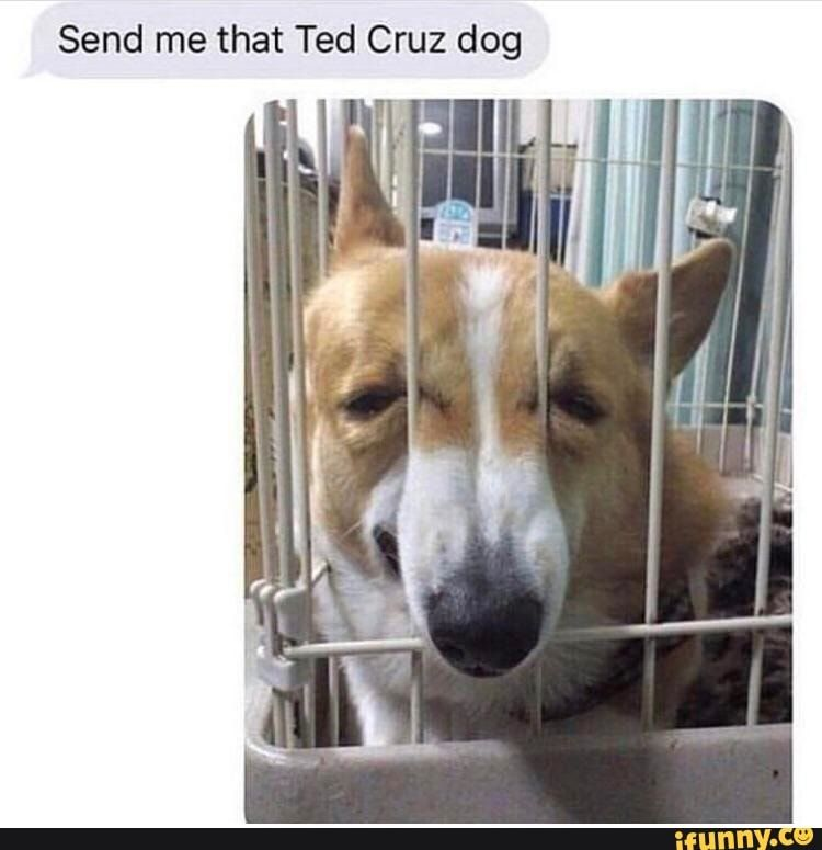 Send Me That Ted Cruz Dog Ifunny Best Funny Pictures Funny Funny Pictures
