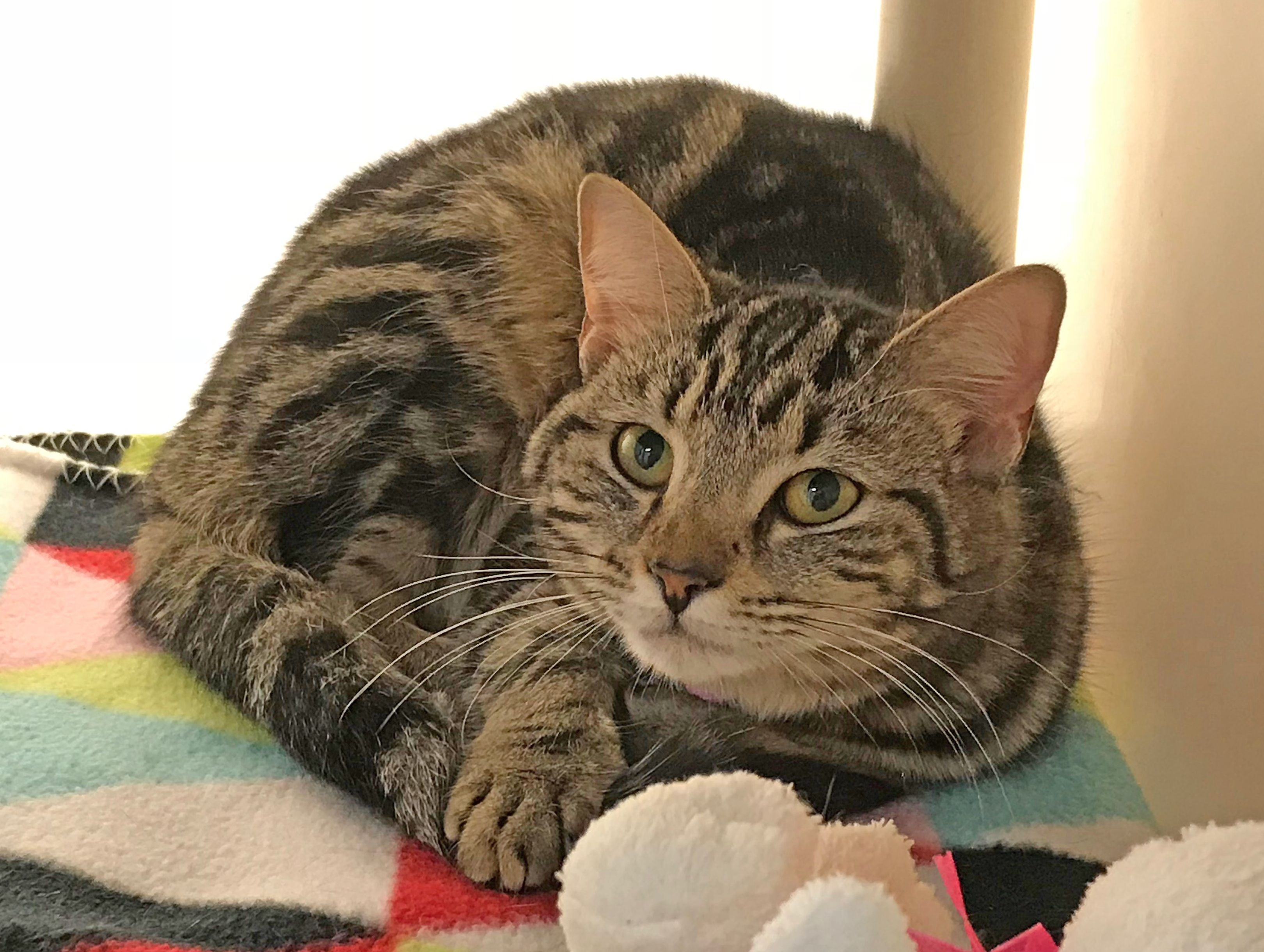 Sangria is a sweetheart! She's friendly and ready to make