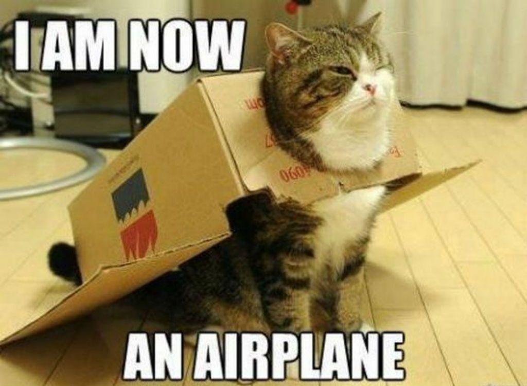 100 Funniest Cat Memes Ever Funny Cute Cats Funny Dog Captions Funny Cat Memes