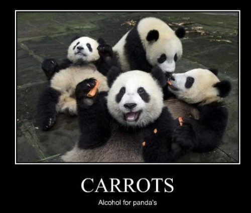 China needs to quit hoggin all the pandas 26 photos panda funny panda pictures with captions panda bear funny 9 china needs to quit hoggin all the pandas 26 voltagebd Choice Image