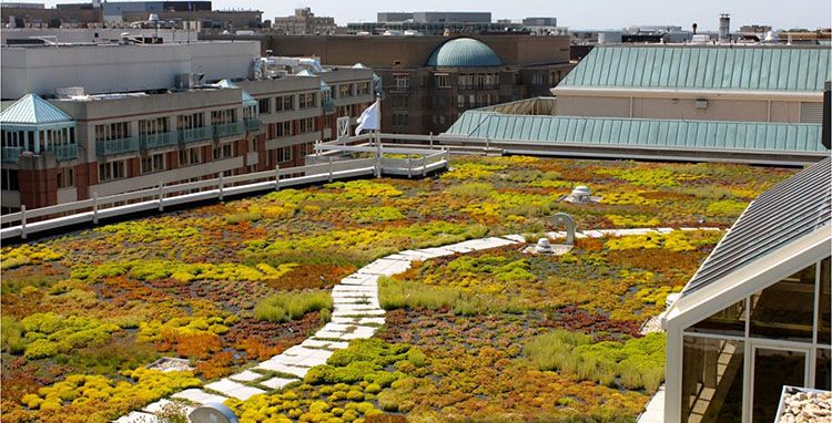 Intensive Vs Extensive Green Roof Is Your Building A Good Candidate For An Extensive Green Roof Green Roof Extensive Green Roof Green Roof Garden