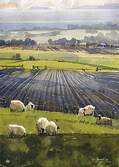 Fife Sheep ~ watercolor by Iain Stewart ~ (summer, art, illustration)