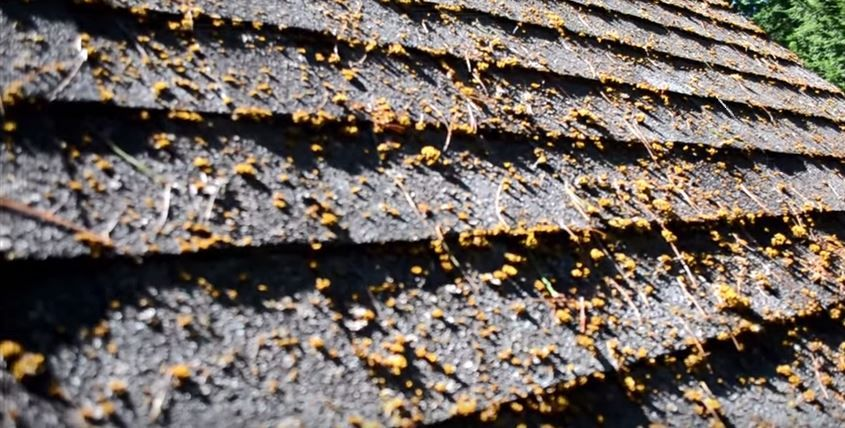 Check out my review of Wet and Forget for removing moss mold – Mold On Roof Shingles