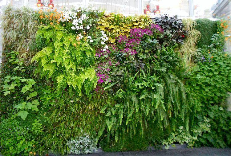 Best Plants For Vertical Garden Vertical Garden Plants Vertical Garden Indoor Living Wall Garden