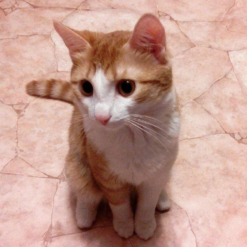 50 German Cat Names Pretty Cats Cat Names Cute Cats
