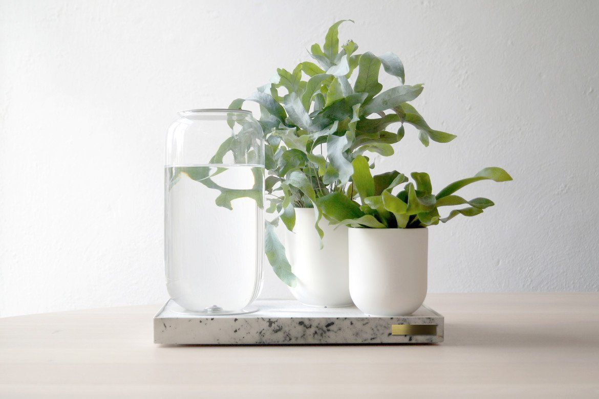 Tableau - Automatic House Plant Watering Tray | Man of Many