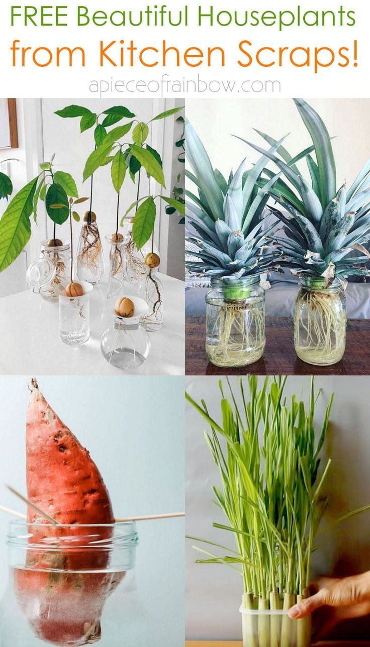 Photo of Regrow 8 Kitchen Scraps into Free Houseplants!