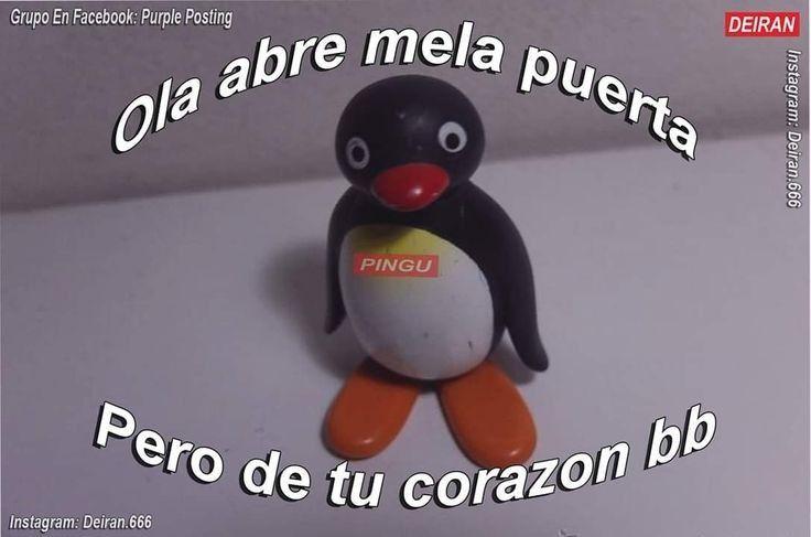 O1 Memes De Pingu Frases De Pinguinos Memes Lindos Y