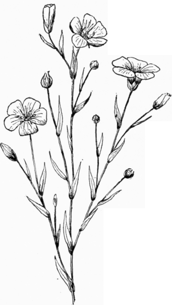 Flower Plant Line Drawing : Drawing plants and flowers pesquisa google tattoos