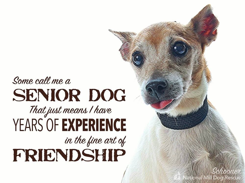 Adopt A Senior Adoptdontshop Nmdr Rescue Dogs Dog Quotes