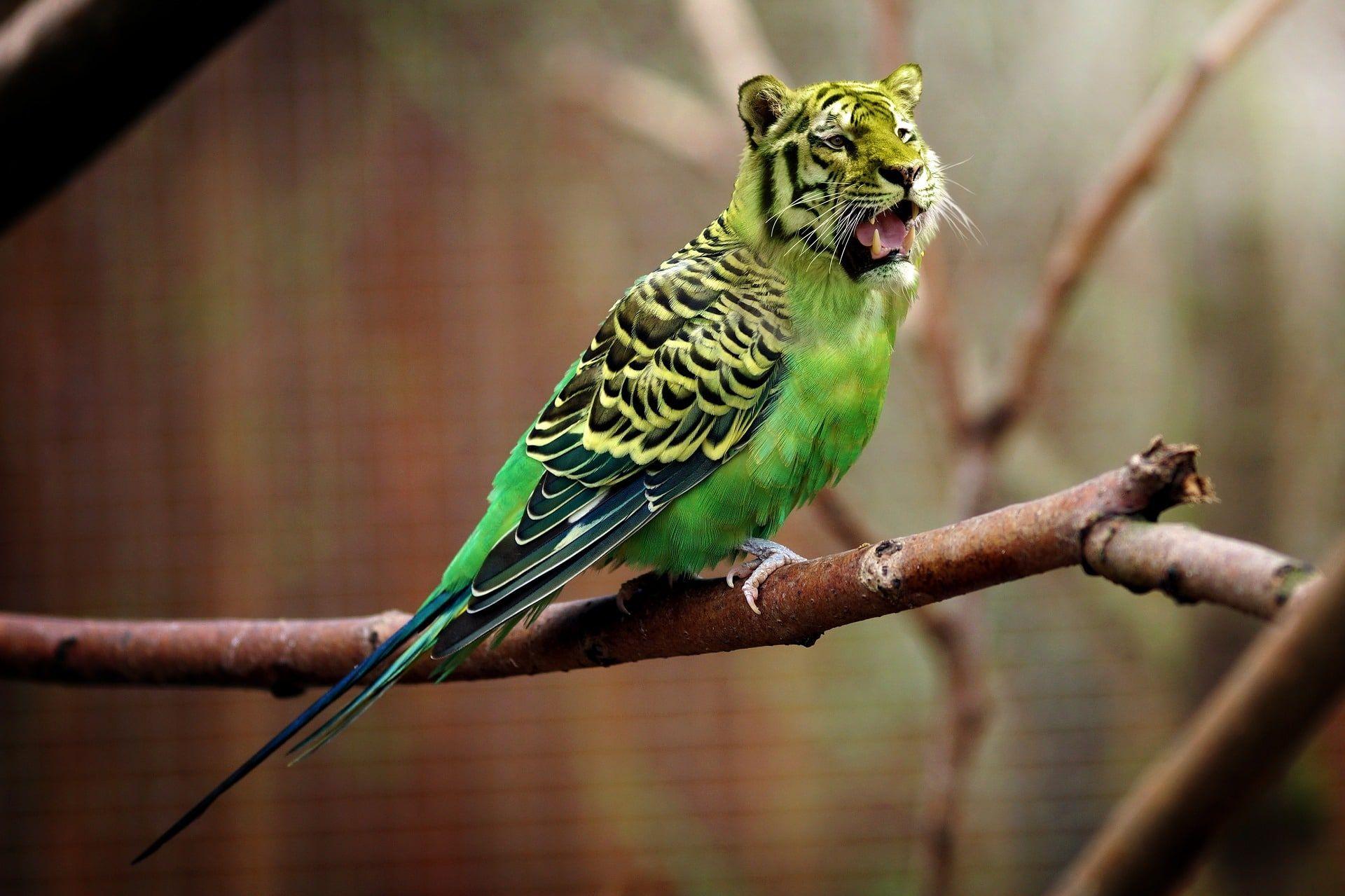 3 Great Apartment Pets Parrot Parrot Pet Pionus