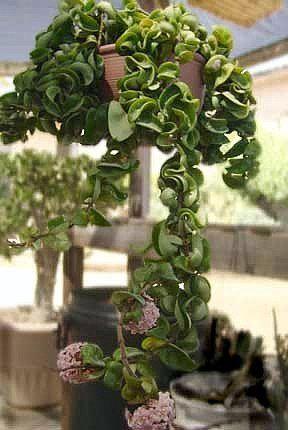 Pin On Garden Beauty