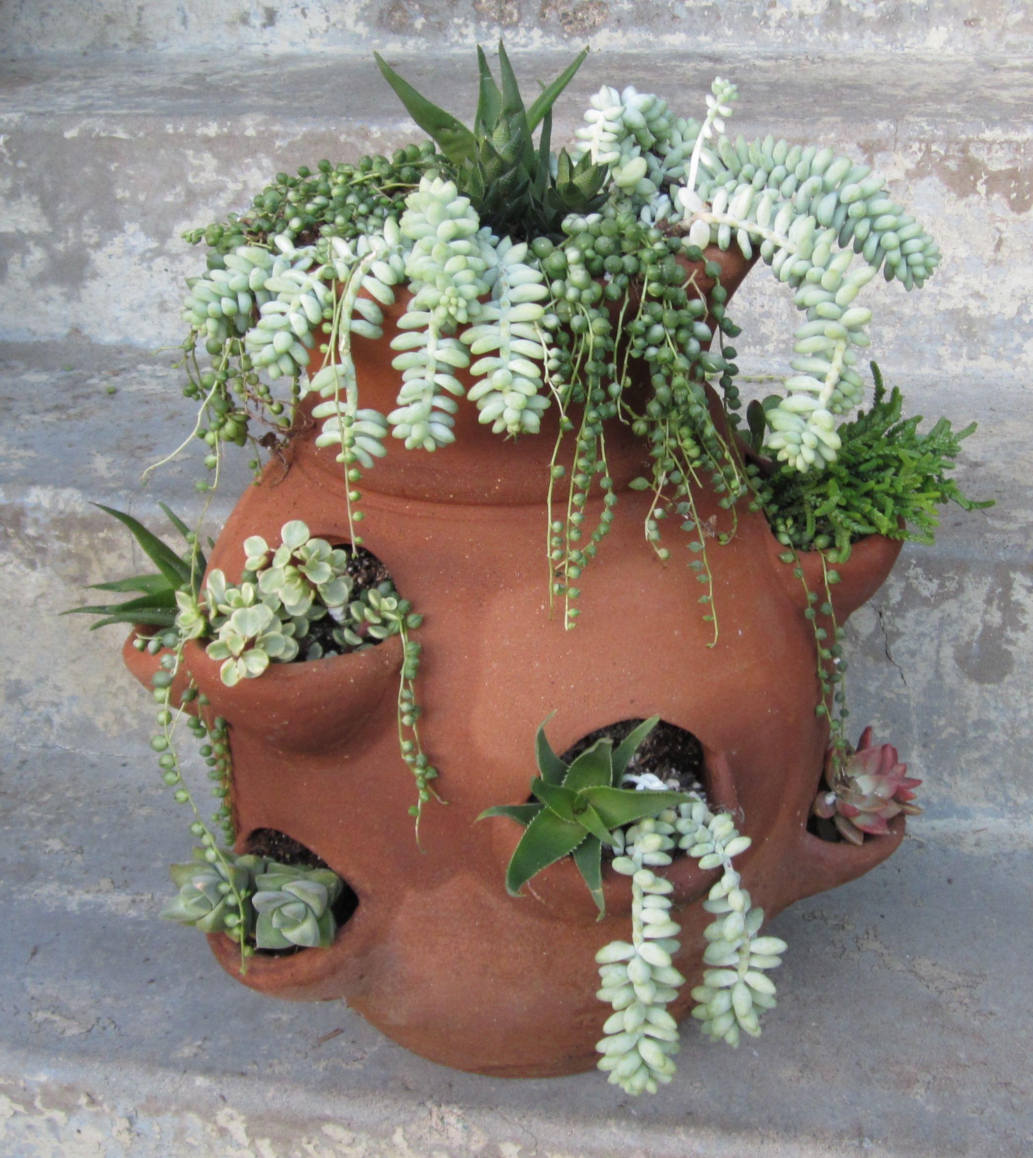 Succulents in an old strawberry pot plante succulente pinterest plantes grasses - Plantes grasses en pot ...