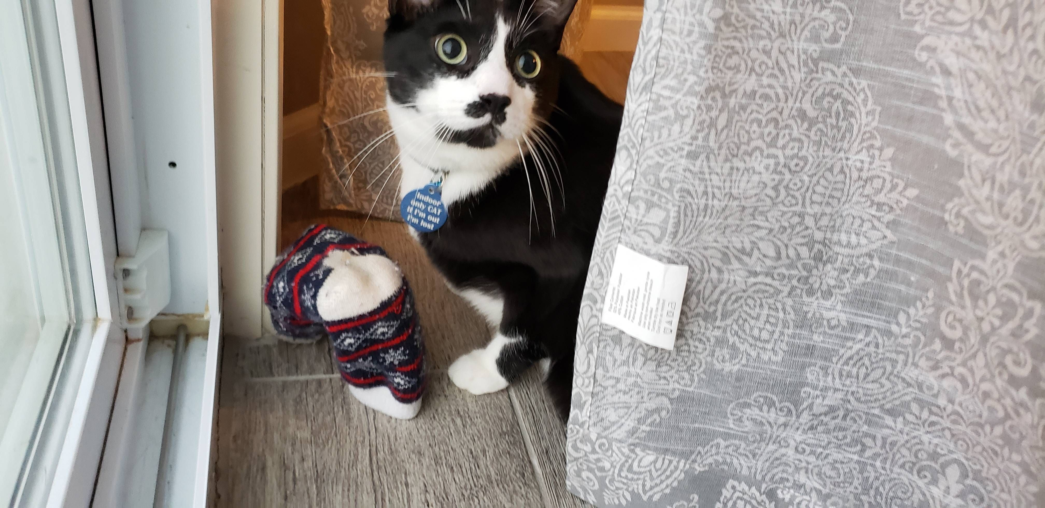 Our Cat Misses My Wife When Shes At Work So Everyday He Grabs Her House Sock To Cuddle With Http Bit Ly 2m9jhes House Socks Cats Missing My Wife