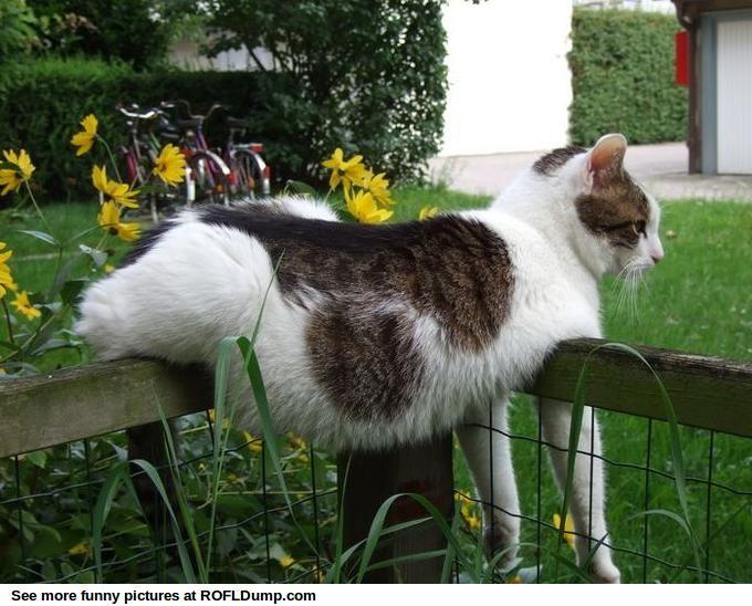 SO nice day  #funny #lol #cat