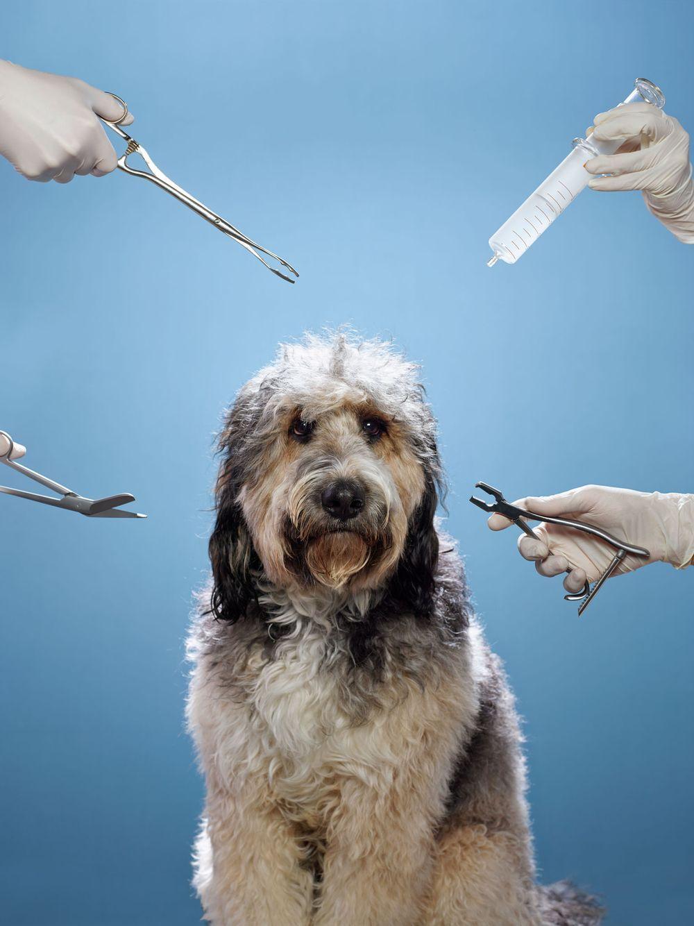 The HighCost, HighRisk World of Modern Pet Care Pets