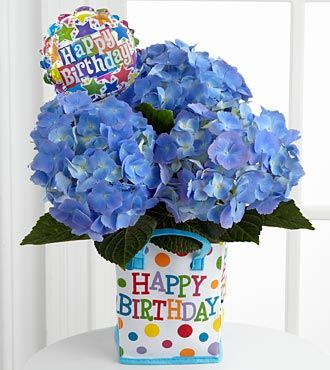 The Birthday Bliss Hydrangea Plant Bursts Onto The Scene With Beautiful Blooms To Make Their Cele Happy Birthday Blue Happy Birthday Flower Planting Hydrangeas