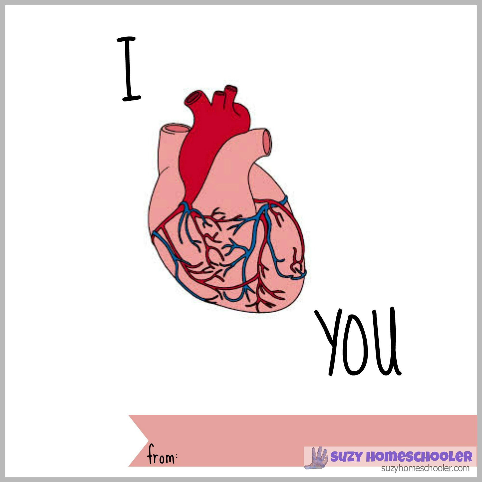 Stem Saturday Free Printable Human Heart Fact Valentines