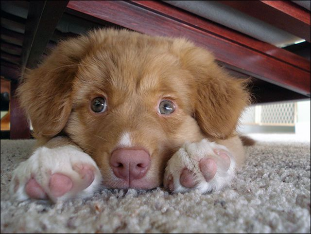 Toller Cute Dogs Baby Puppies Dogs